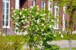 Только 7% покупателей «малоэтажки» ожидают снижения цен до конца года